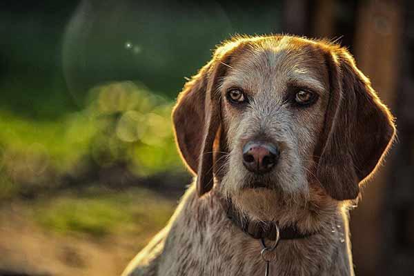 Hund gegen die Sonne fotografiert