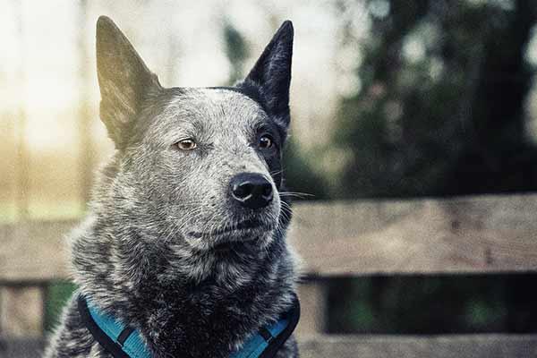Hundeportrait Outdoor