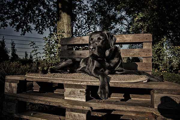 Labrador chillt gern in der Sonne