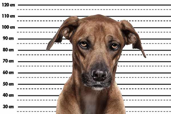 Polizeifoto von einem Hund