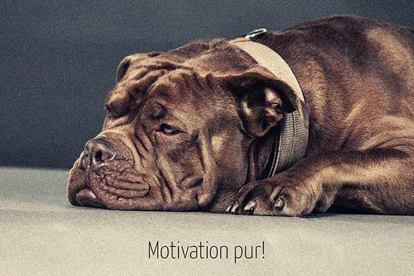 Hundefotografie im hundefreundichen Studio