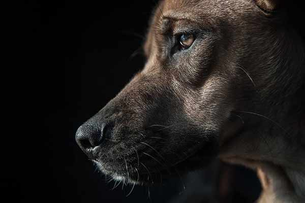 Low Key Hundefotografie