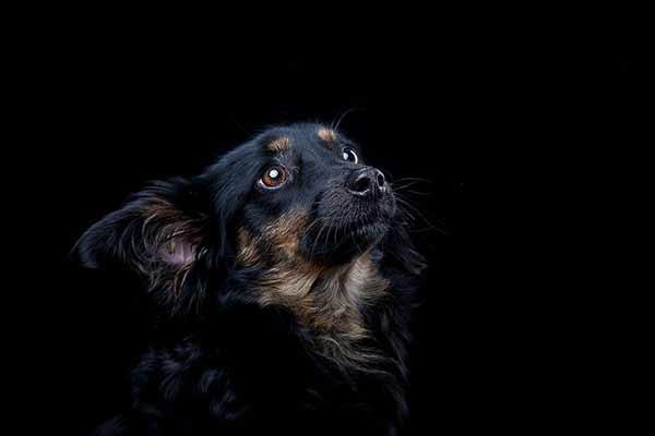 Kleiner Hund schaut Frauchen an