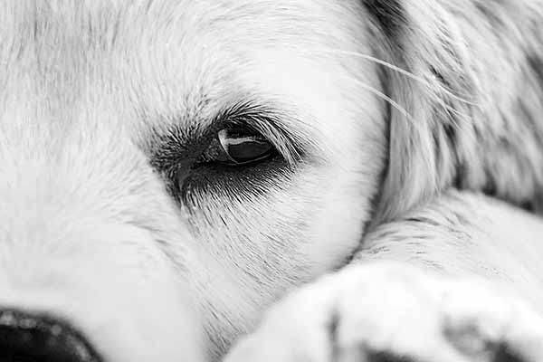 Junger Hund in Grömitz Hundestrand