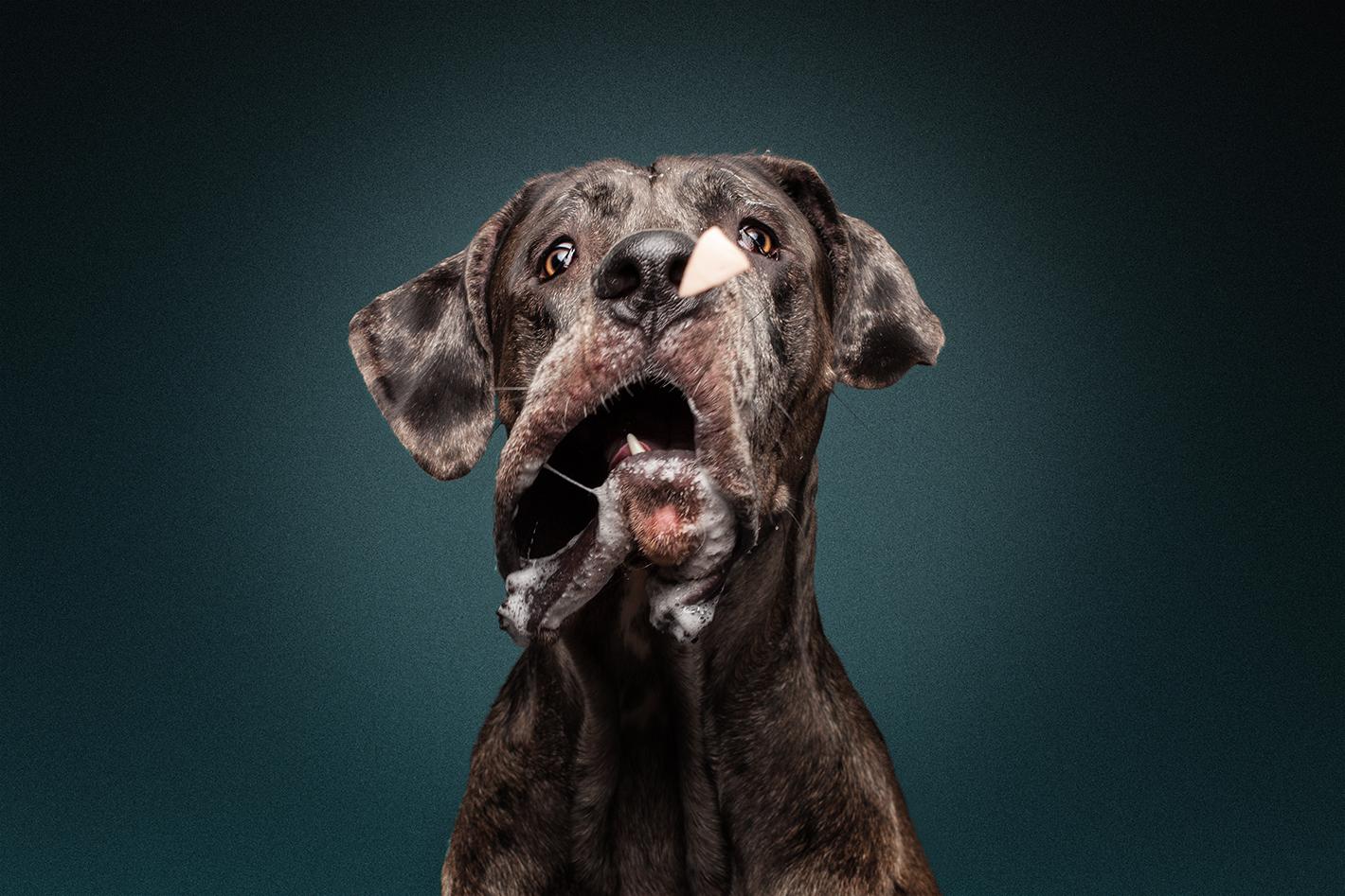 Jimdo Werbung - Hunde schnappen Leckerli