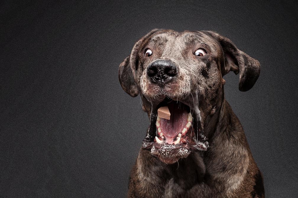 Fotograf für Leckerli Hund Fotos Ruhrgebiet