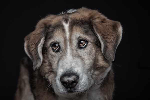Hundeopi im Fotostudio