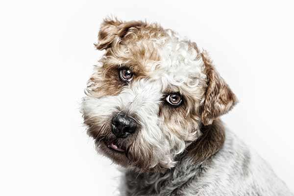 High Key Hundefoto
