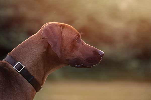 Hundeportrait im natürlichen Licht