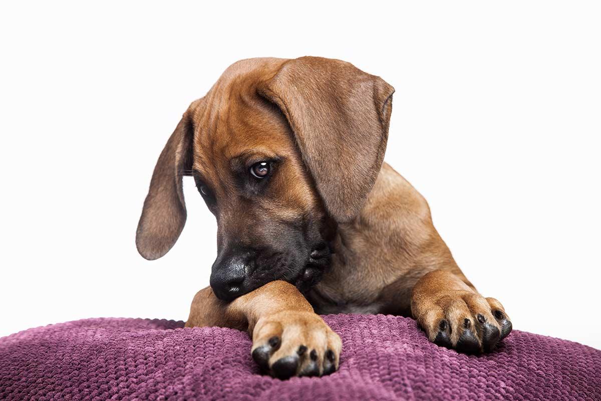 Süsses Hundebild mit strahlenden Augen