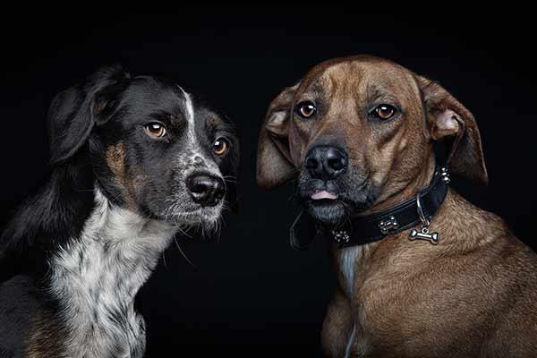 Hundepaar beim Fotoshooting