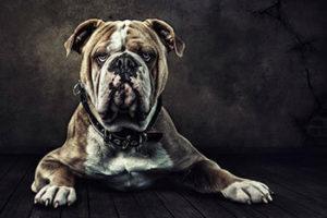 Fotograf für schöne Hundefotos