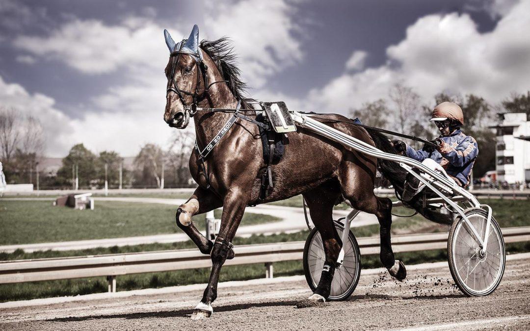 Fotograf für Pferde Niederrhein