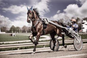 Fotograf für tolle Pferde Portraits