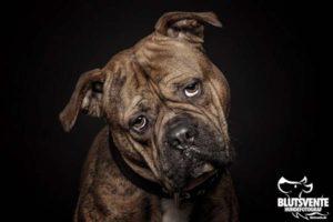 Der fragende Hund