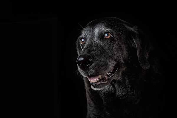 Low Key Foto in der Hundefotografie