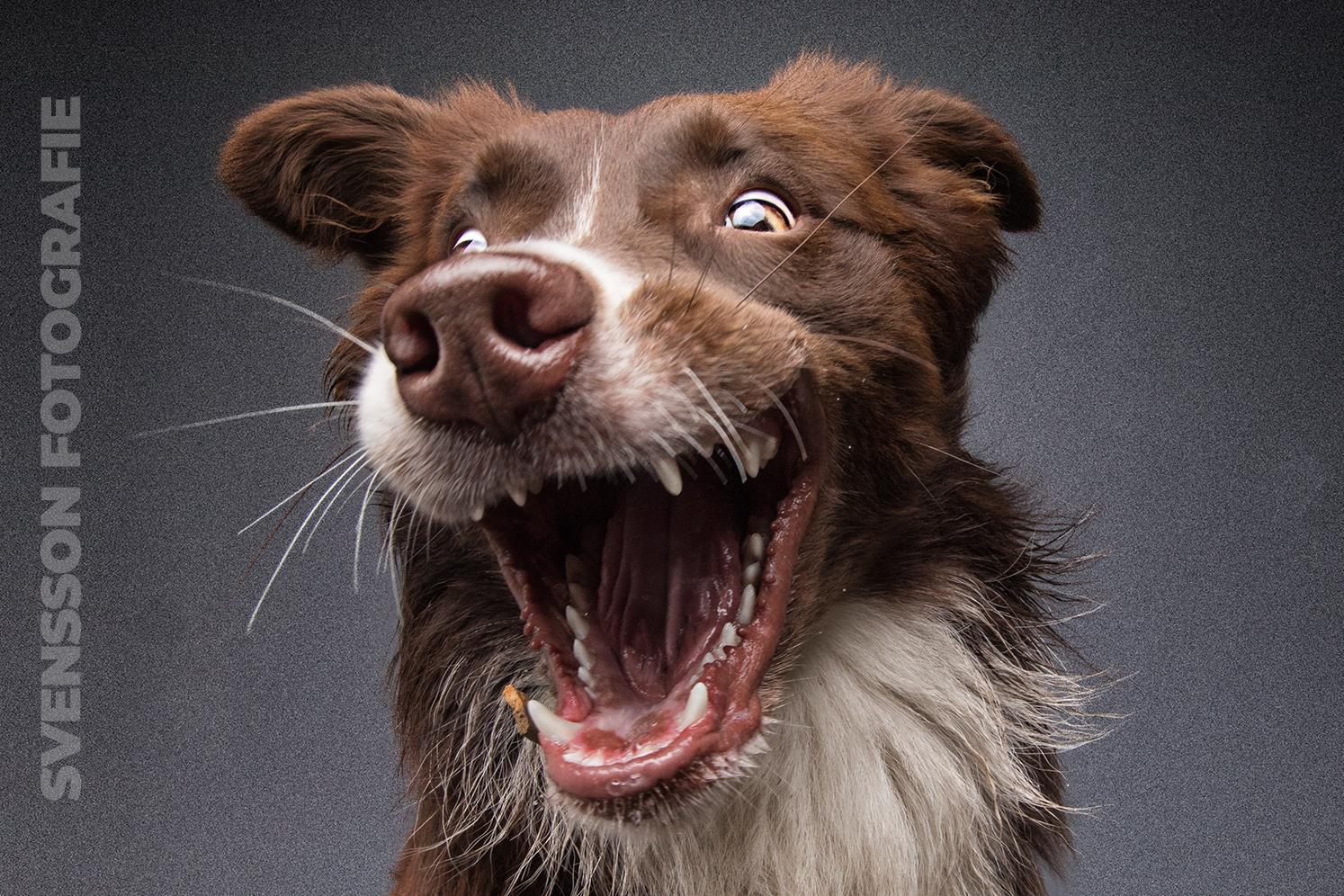 Hund freut sich über Hundefutter
