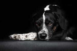 Mischlingshund aus Spanien