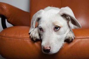 Pflegehund aus dem Tierschutz