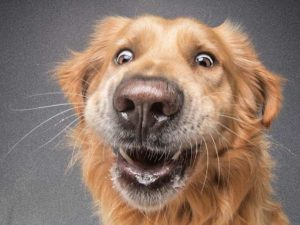 Hund schnappt Leckerli