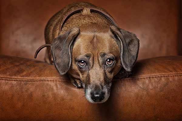 Hundefotografie mit einzigartiger Fotobearbeitung