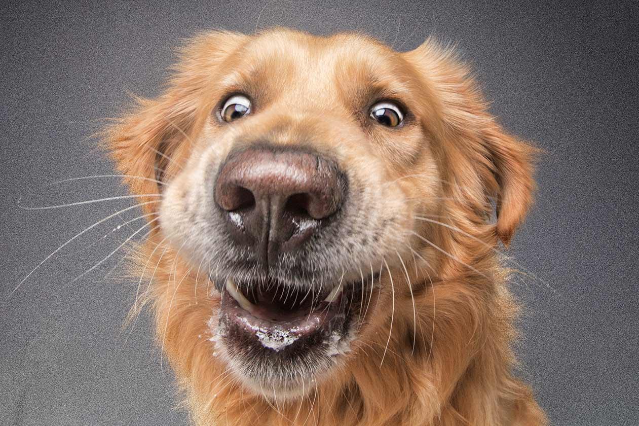 Fotostudio Dinslaken - lustiges Hundebild