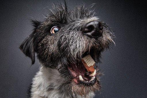 Fotograf für Hundefotografie
