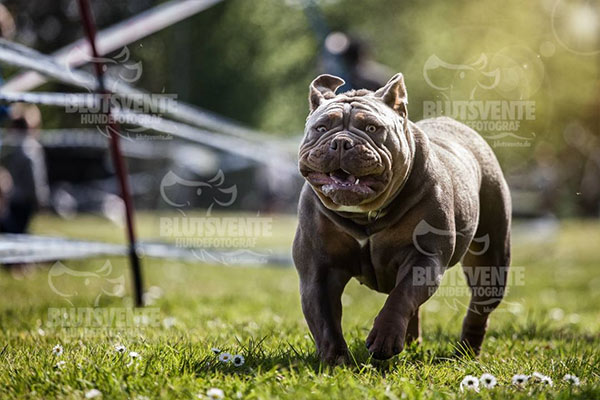 Hund in Bewegung fotografieren