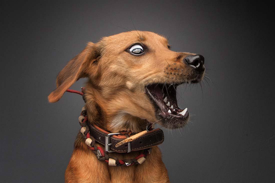 Hunde fangen Futter Fotos