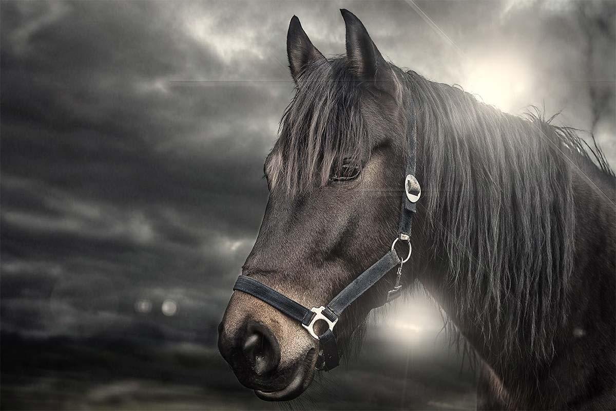 Fotostudio Dinslaken Pferde Portraits