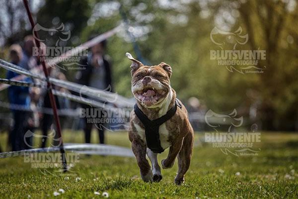 Actionaufnahmen vom Hund