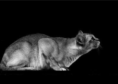 Fotostudio Dinslaken für Katzenfotos