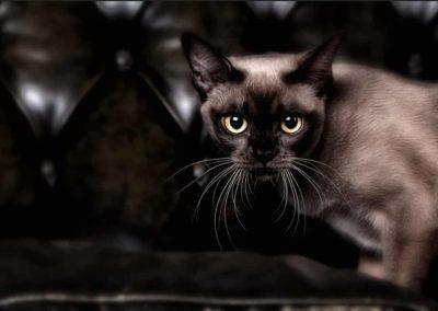 Fotostudio für Haustiere