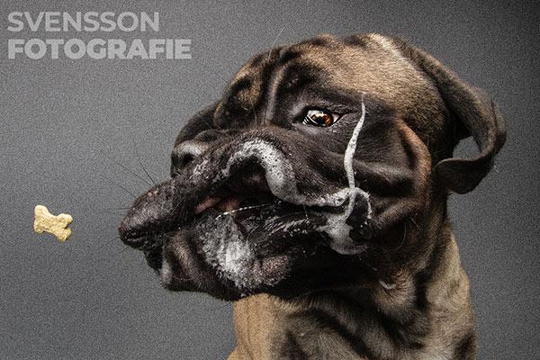 Viel Sabber beim 85 kg Hund