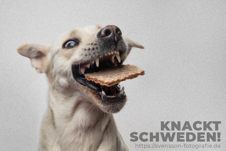 Hundefoto zur Fussball-WM