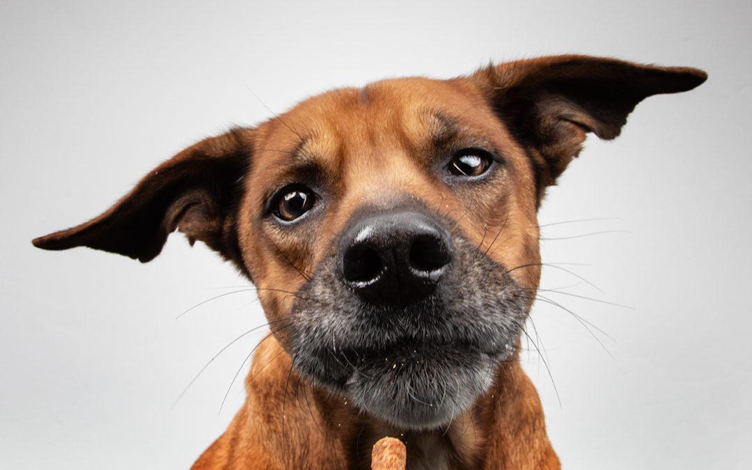 Lustiges Hundebild aus Dinslaken