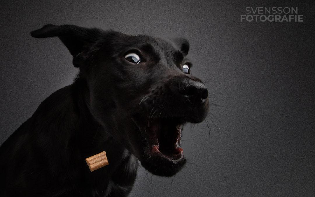 Witziger Hunde-Fotokalender