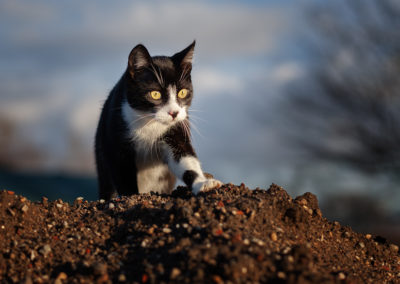 Katzenfotos Outdoor