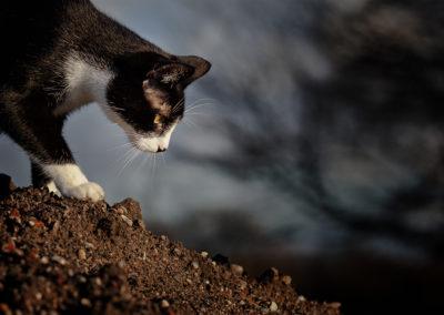 Katzenfotos in der Natur
