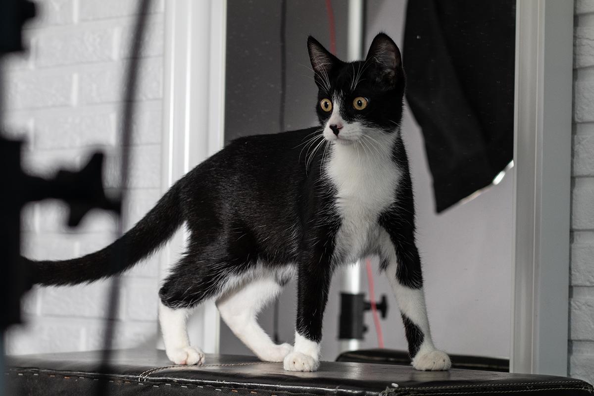 Katzenfotos in Ihrem Zuhause