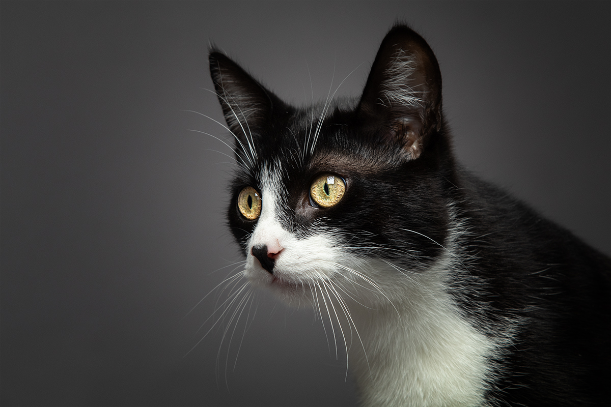 Katzenfotoshooting Dinslaken