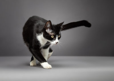 Katzenfotos vom Fotografen