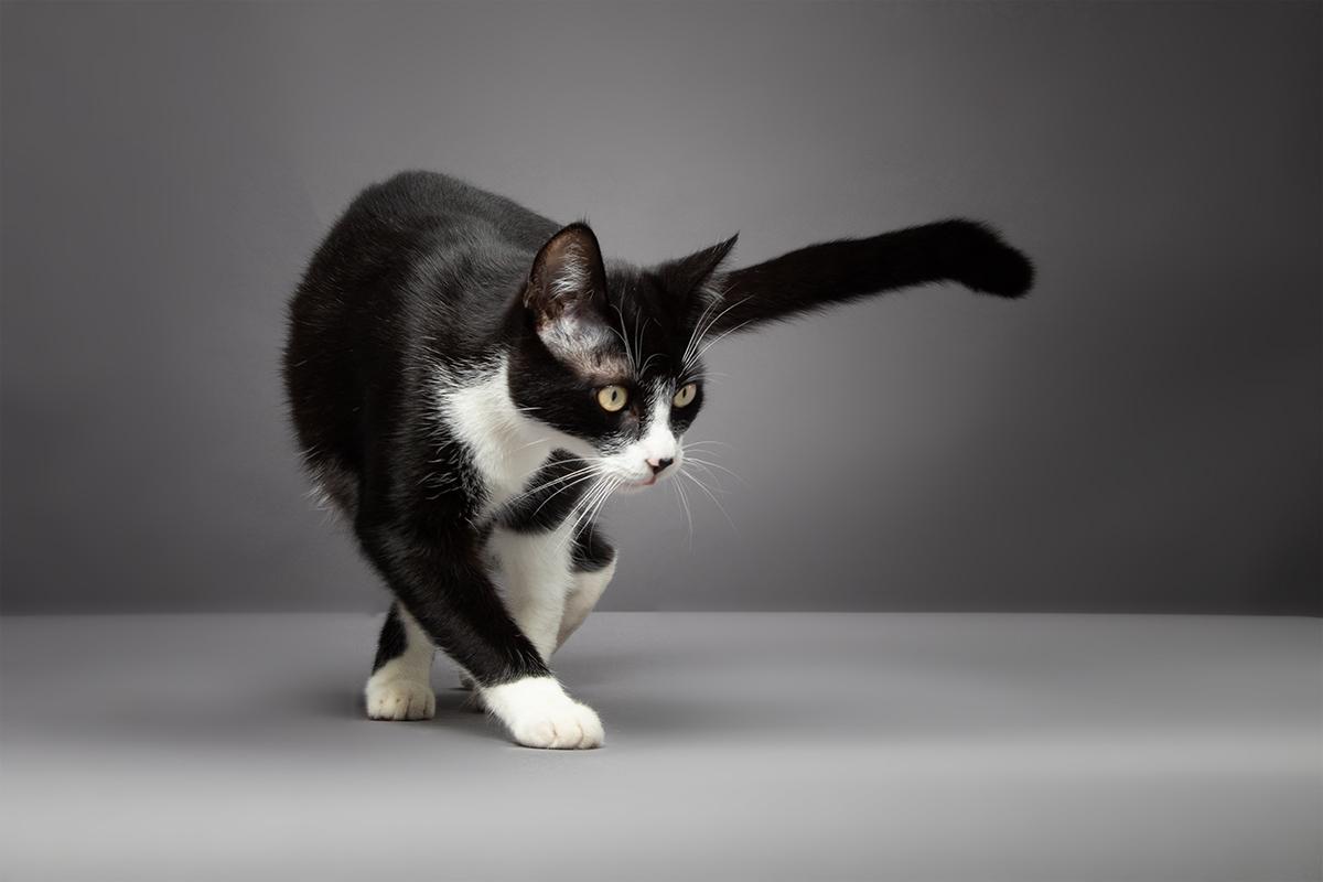 Katzenfotos vom Fotografen Dinslaken
