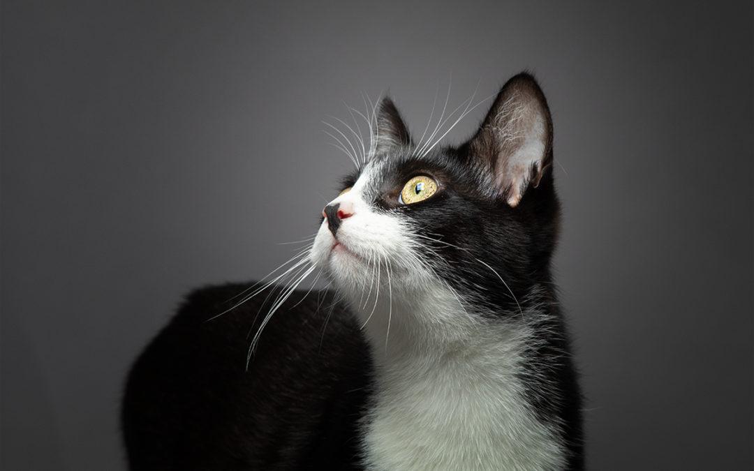 Katzenfotos im Fotostudio