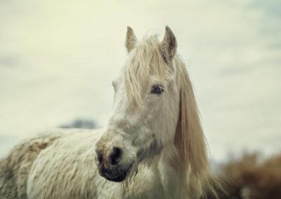 Fotograf für Pferde