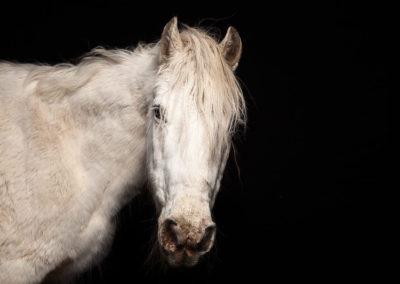 Fotostudio für Pferdefotos