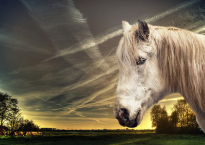 Pferdefotograf Dinslaken