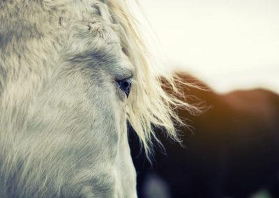 Professionelle Pferdebilder
