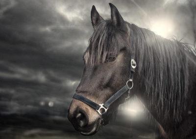 Pferdeportrait künstlerisch