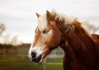 Pferdefotos Outdoor Niederrhein